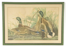"Large folio Mallards Bien Edition (stains) (reframed) – sight size 23"" x 35"""